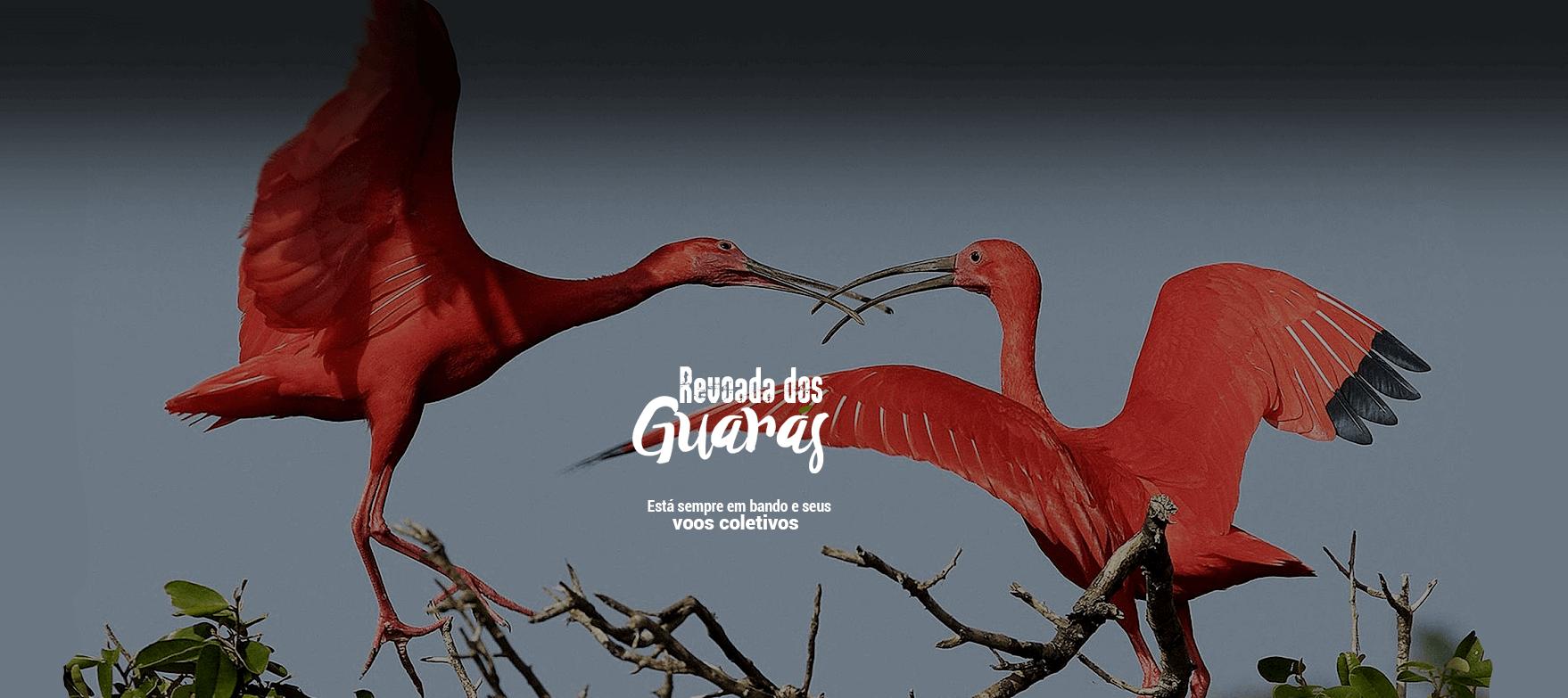 Revoada dos Guarás